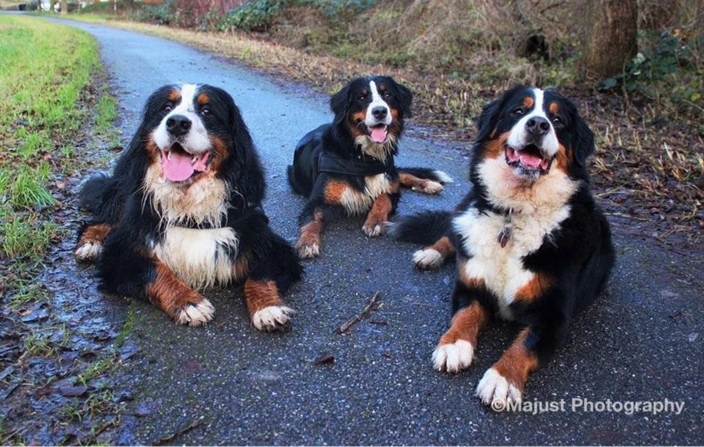 Drei D die dreisten drei d foto bild tiere haustiere hund bilder auf