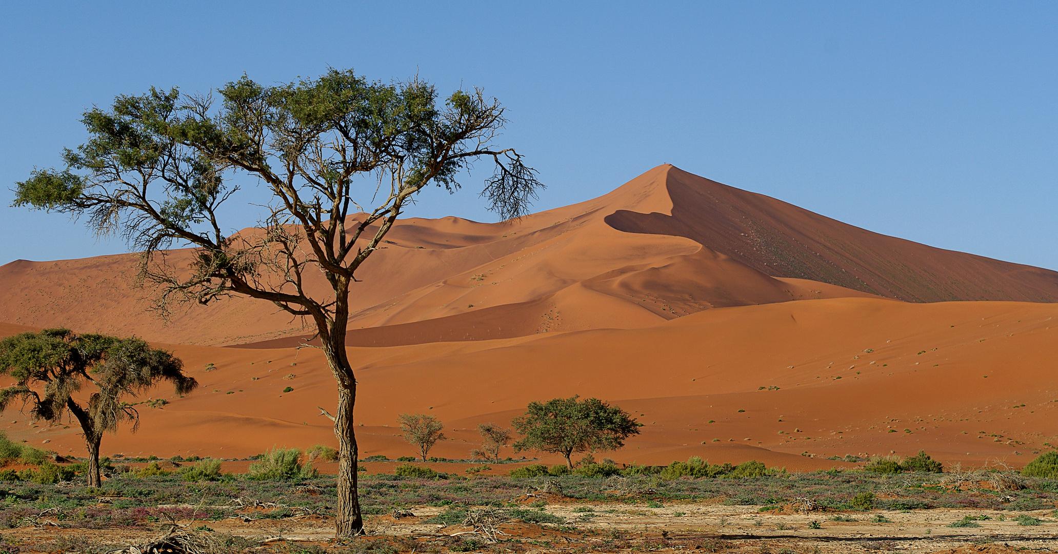 Die Dünen des Soussusvlei/Namibia