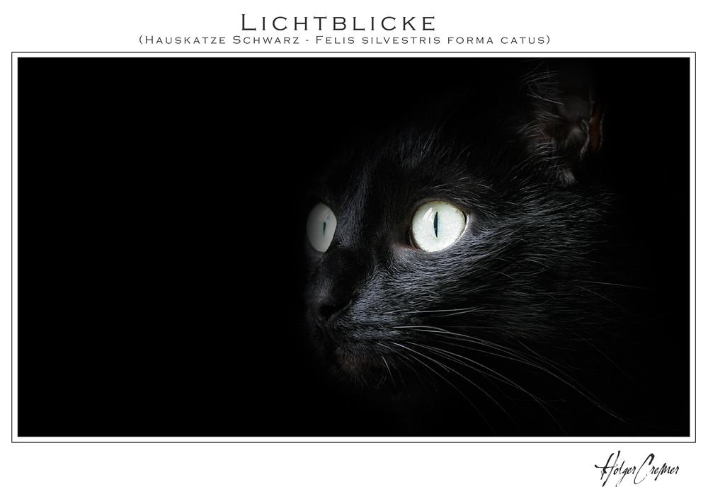 die dunkelheit und das licht (reload)