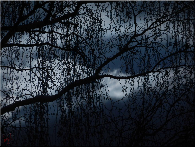 Die dunklere Seite der Birke.