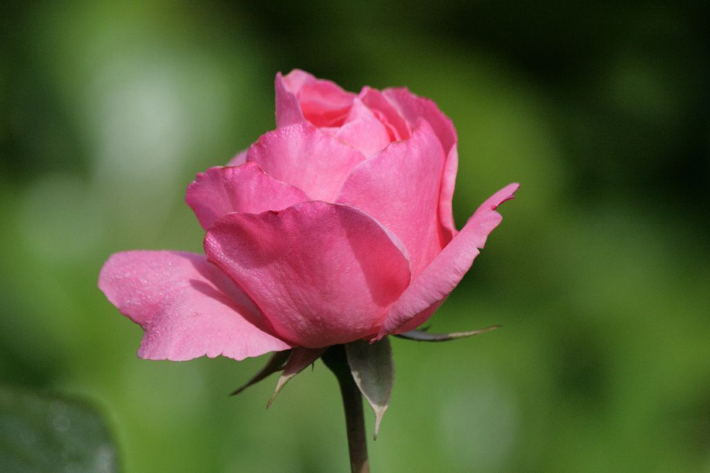 Die edle Blume