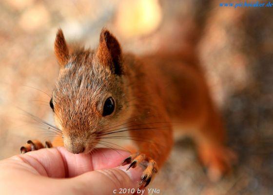 Die Eichhörnchenflüsterin