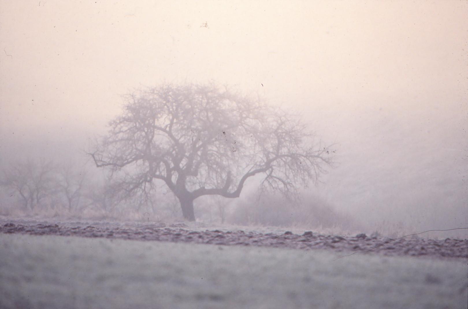 Die Eifel im ersten Frost