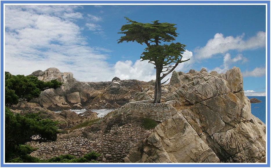 Die einsame Cypresse
