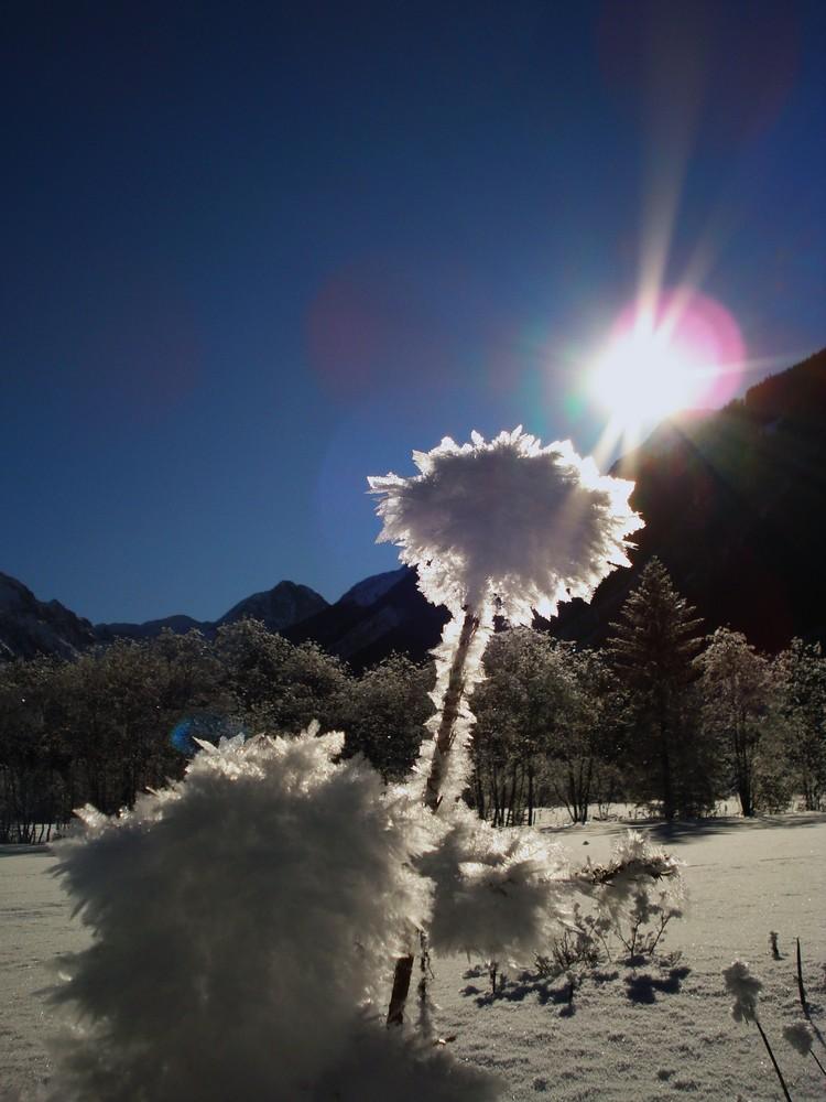 Die Eisblume
