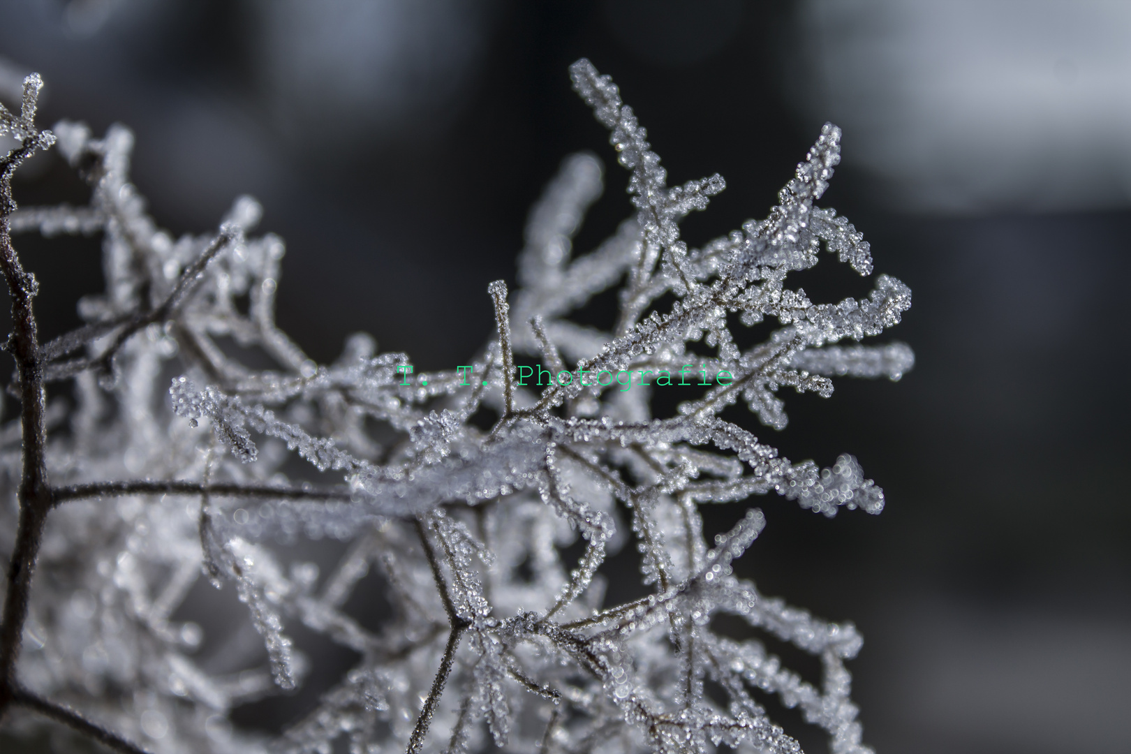 Die Eiskristalle