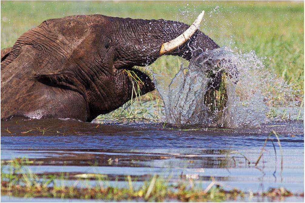 Die Elefanten fühlen sich sichtlich wohl ...