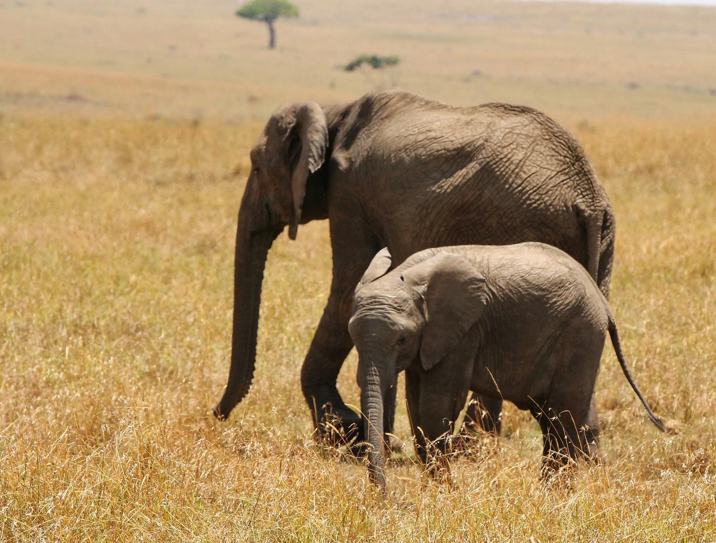 ......die Elefantenherden...(4 Bilder)....
