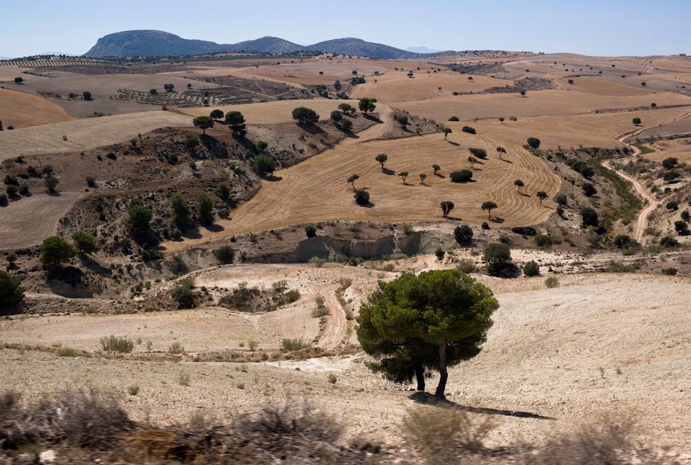 Die endlosen Felder des Don Quijote
