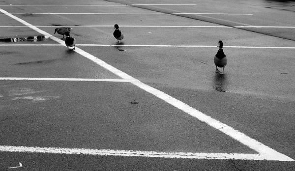 Die Enten