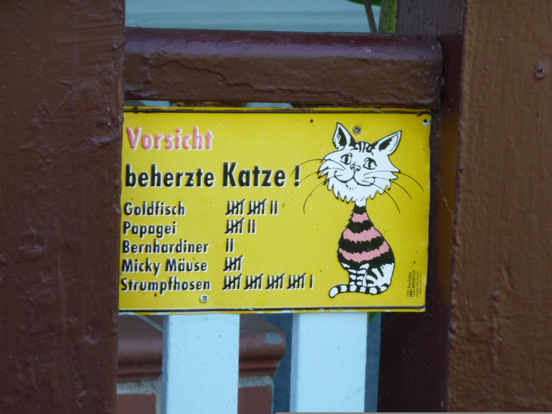 """Die Erfolge eine """"Kampf-Katze""""........"""