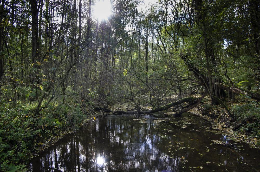 Die Erft im Wald
