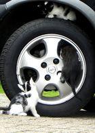 Die Eroberung des Automobils