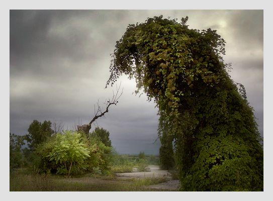 Die Erschaffung des Baumes