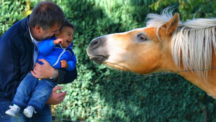 Die erste Bekanntschaft mit unserem Nachbarpferd