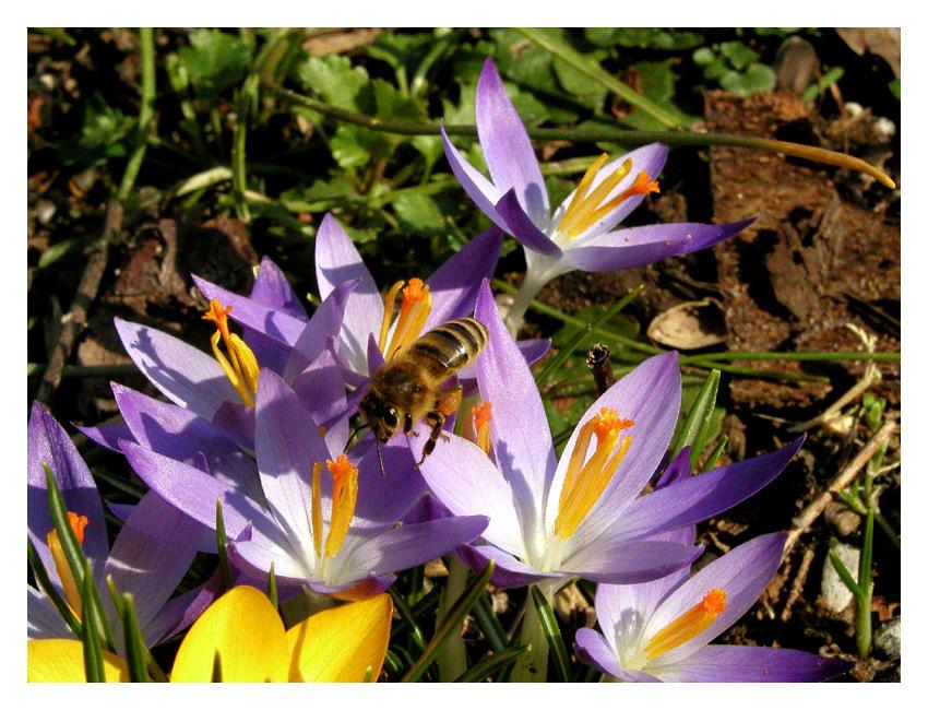 Die erste Biene!