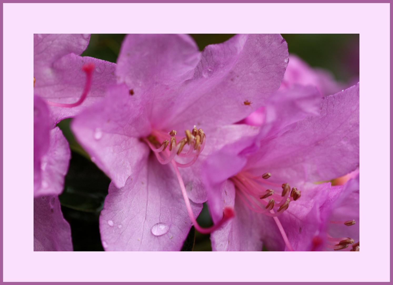 Die erste Blüte
