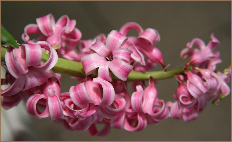 die erste Blüte des Jahres