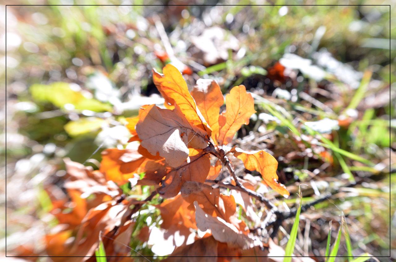 die ersten Blätter fallen....