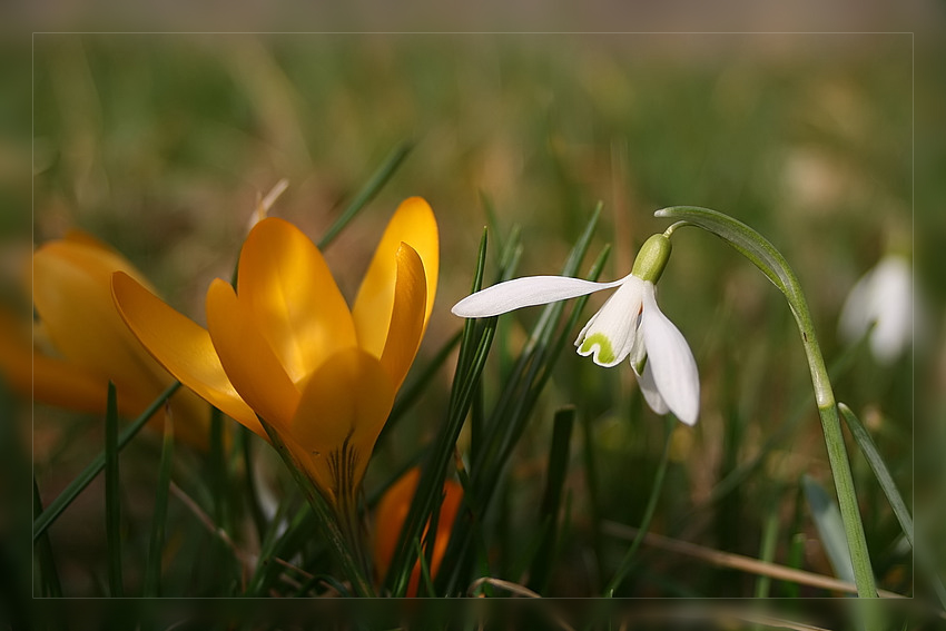 die ersten blüten