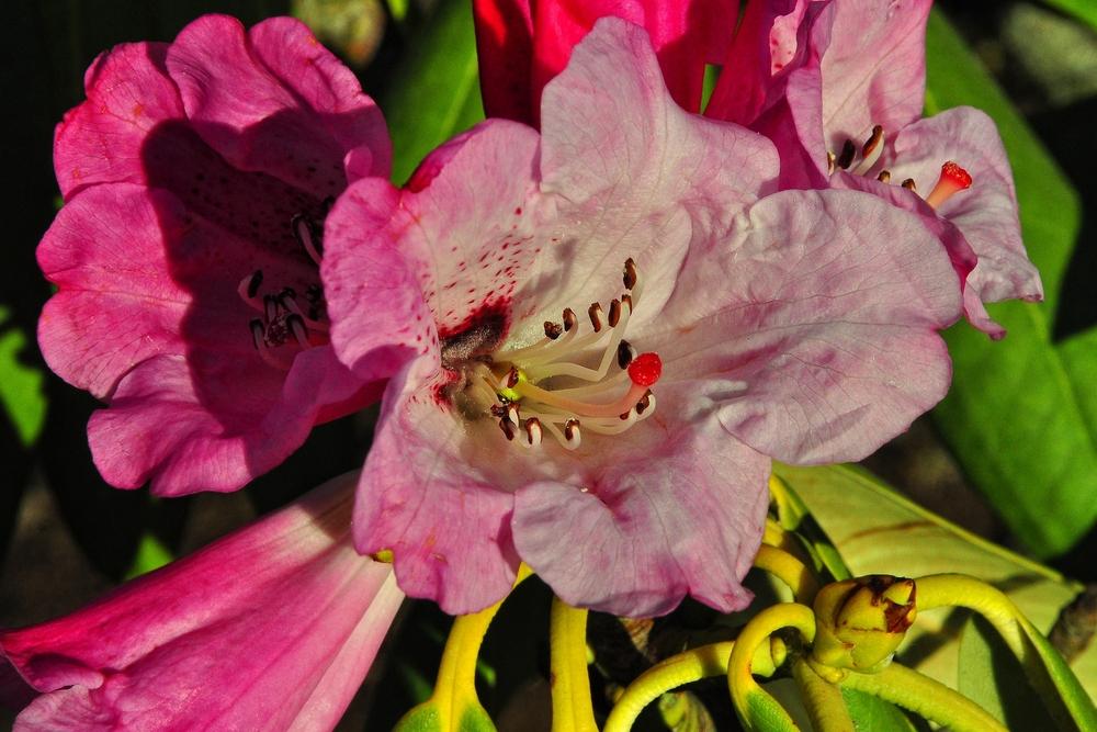 Die ersten Blüten....