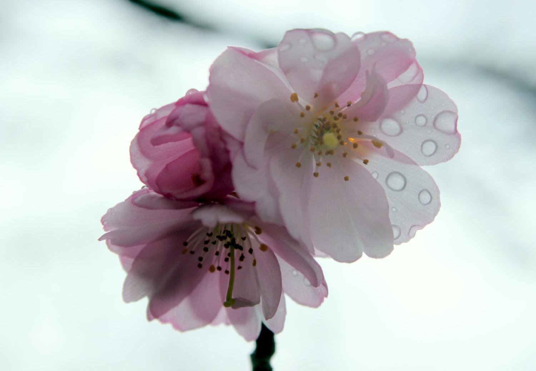 Die ersten Blüten im Skulpturenpark Köln bei Regenwetter