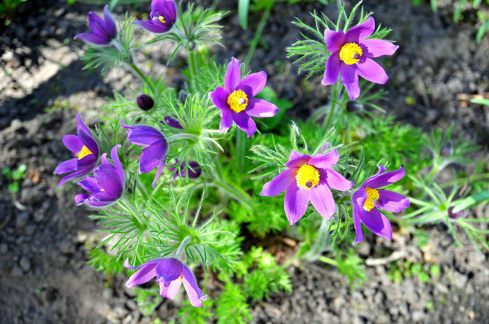 Die ersten Blüten VI