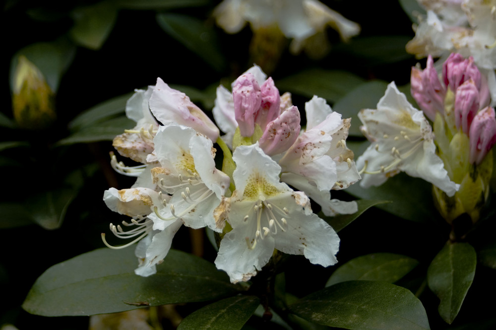 Die ersten Blumen 2008