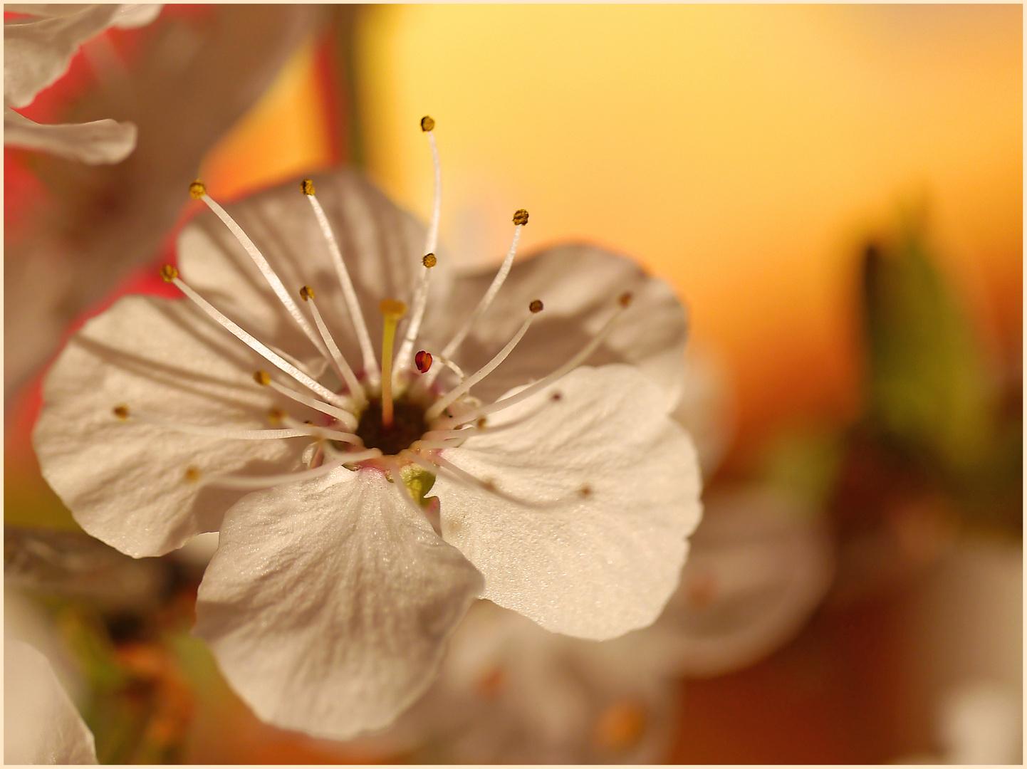 die ersten Frühlingsblüten