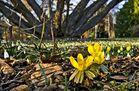 Die ersten Frühlingsblumen im Grazer Stadtpark!