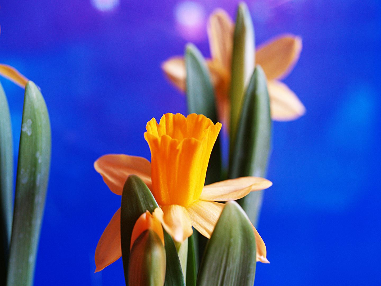 Die ersten Frühlingsboten !! 2