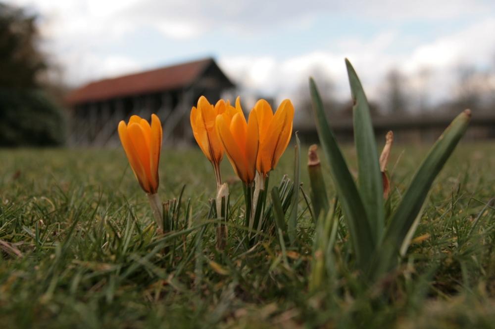 Die ersten Frühlingsboten