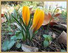 die ersten Frühlingsboten sind da nun sollte es doch langsam mal los gehen!!!