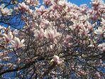 die ersten Frühlingsgrüße...