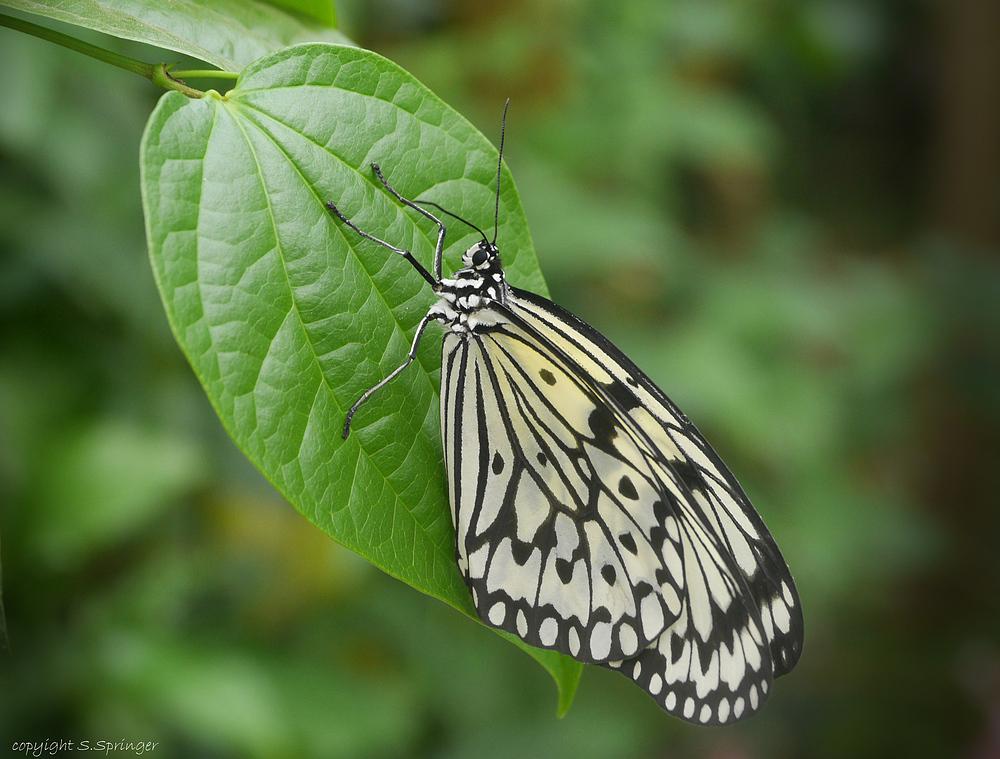 Die ersten Schmetterlinge .....