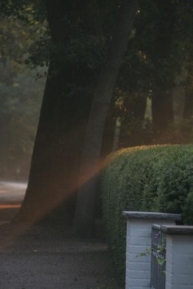 Die ersten Sonnenstrahlen brechen durch das Laub ....