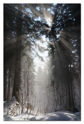 Die ersten Strahlen erobern das Nebelmeer