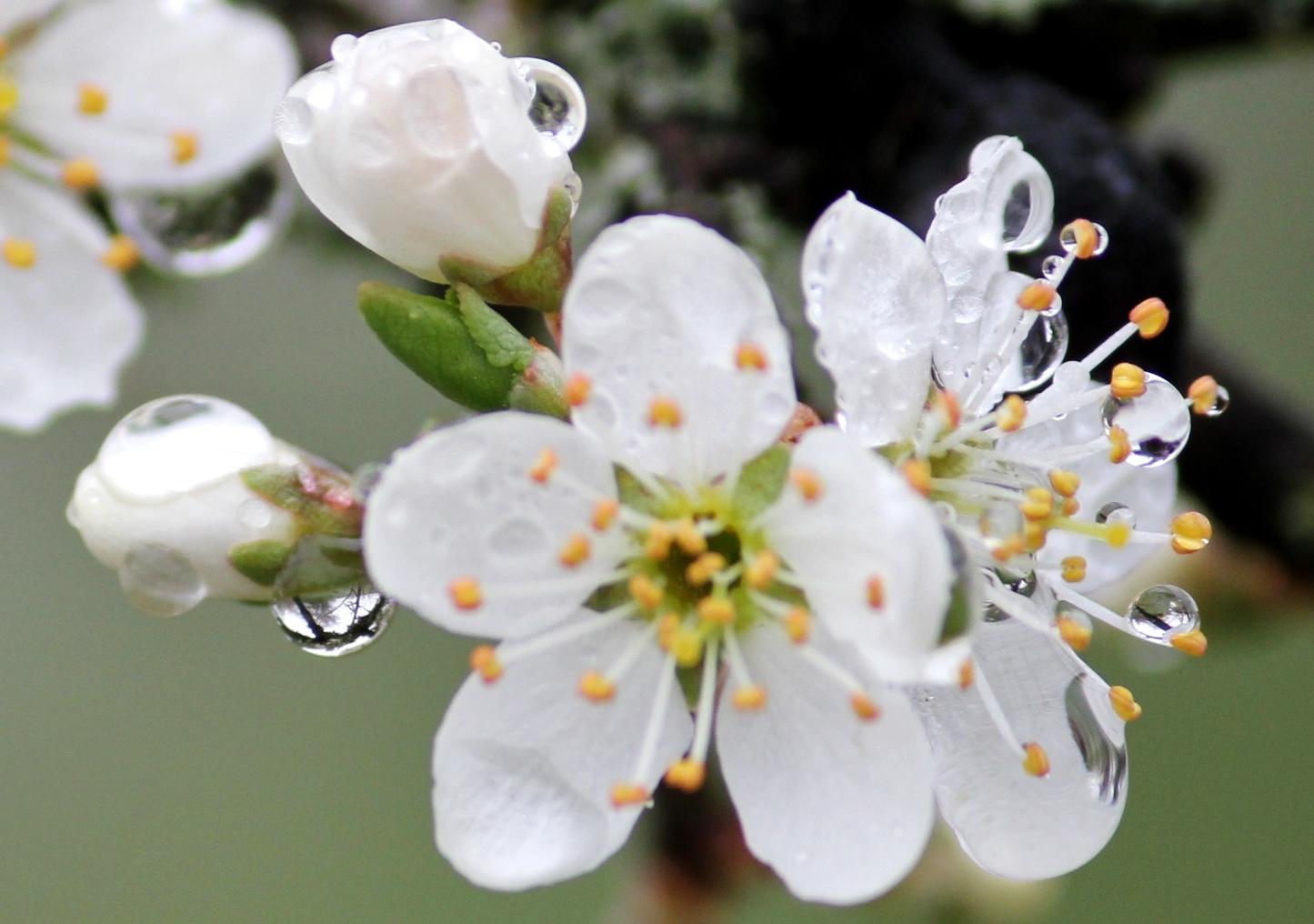 die ersten zarten Blüten