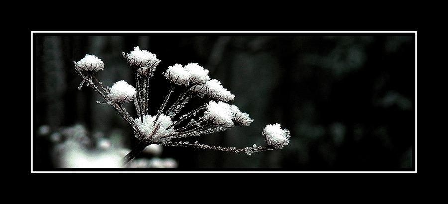 Die ersten zarten Schneeflocken
