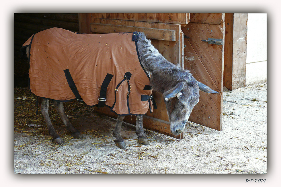 """""""Die Esel auf Aiderbichl"""""""