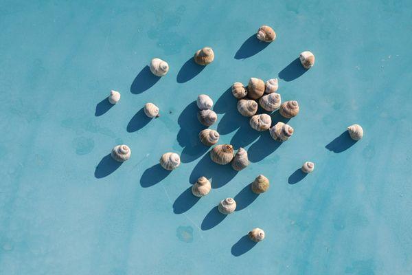 Die Essenz eines Sommertages am Meer?
