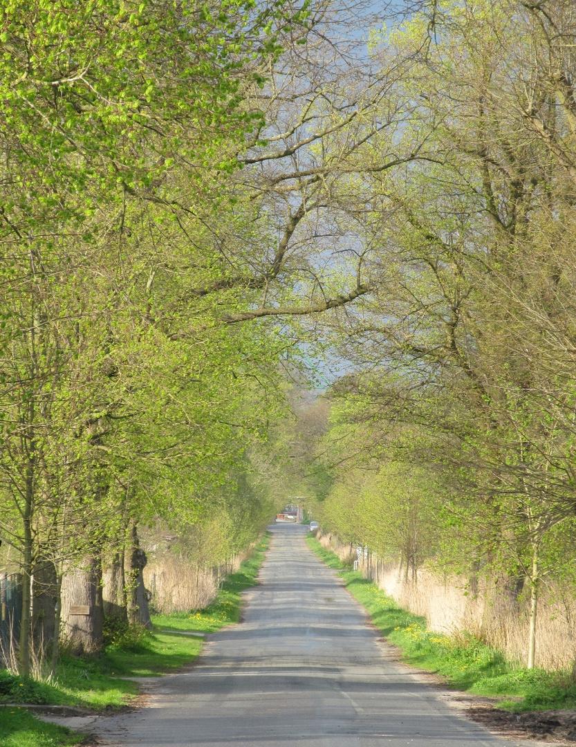 Die Faehrstraßen - Allee im April