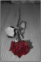 Die Farbe der Rose....rot