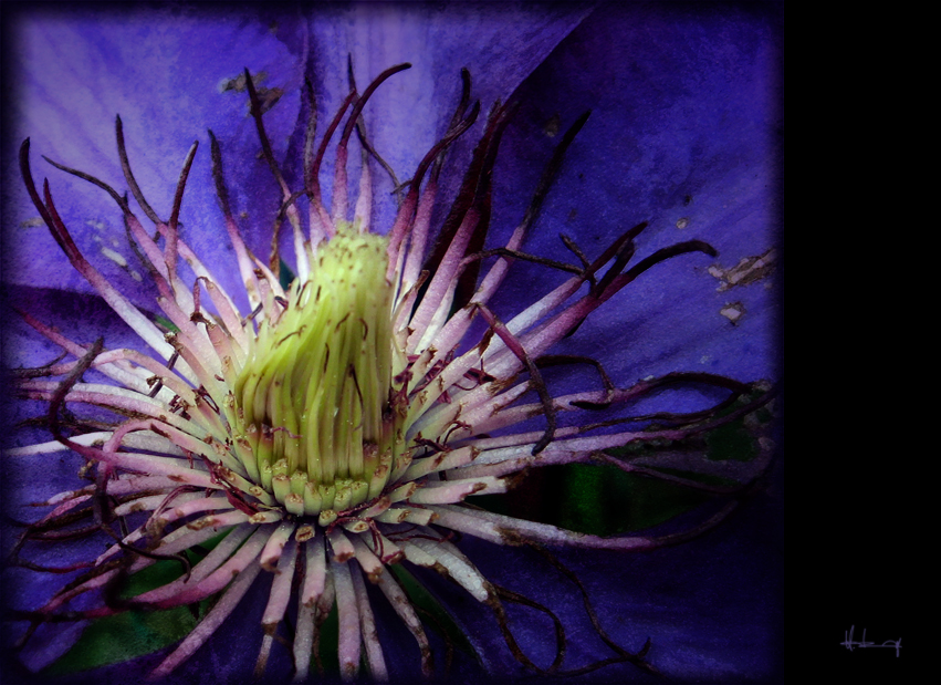 ...die farbe lila...