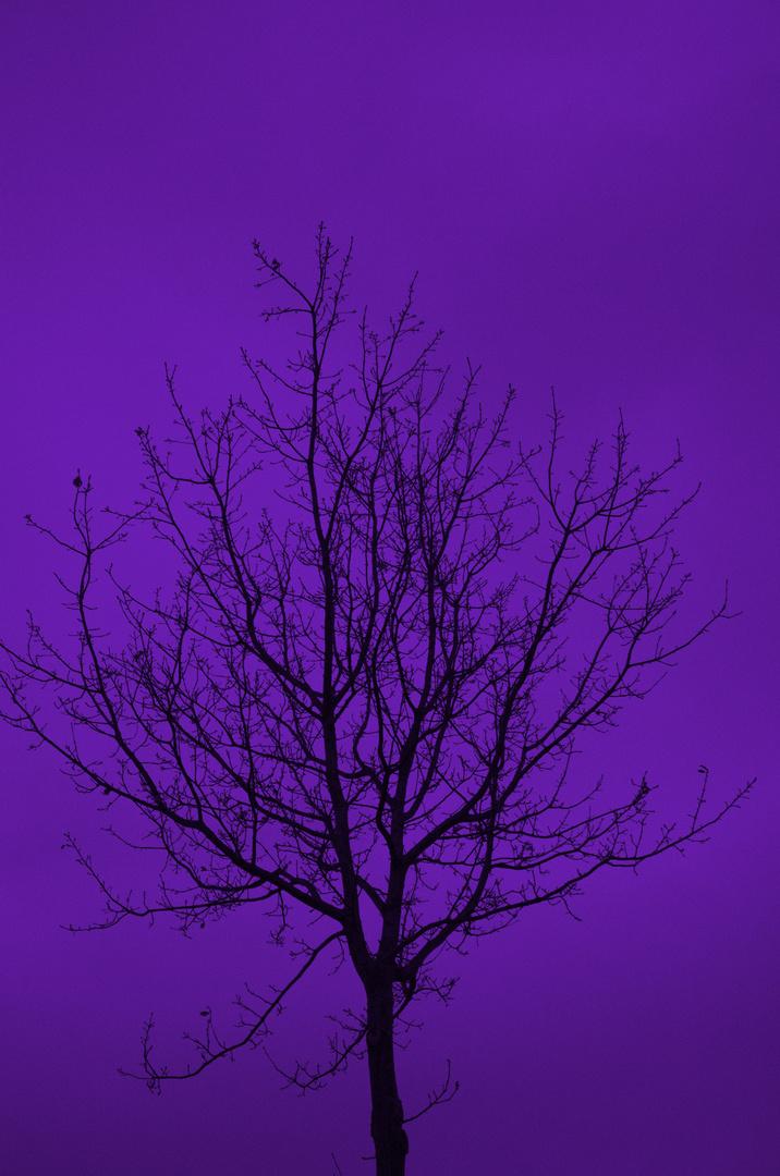 Die Farbe Lila..................