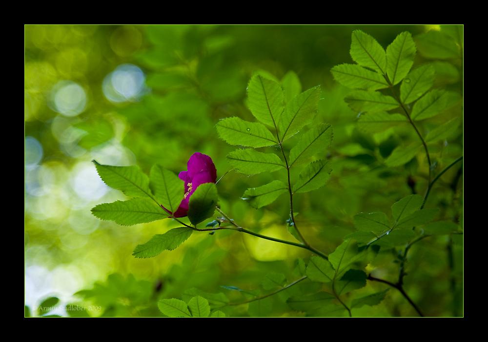 Die Farbe Lila