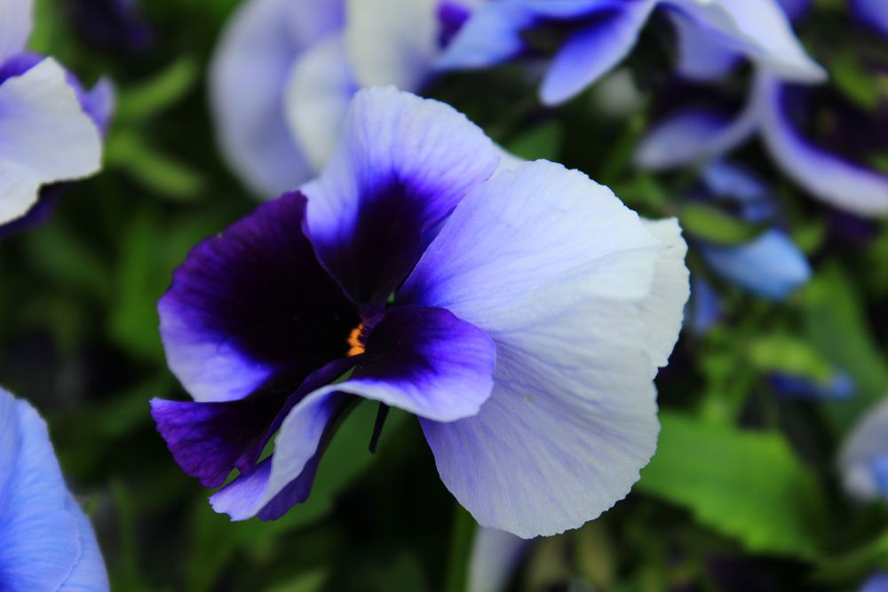 die farbe lila by matt410