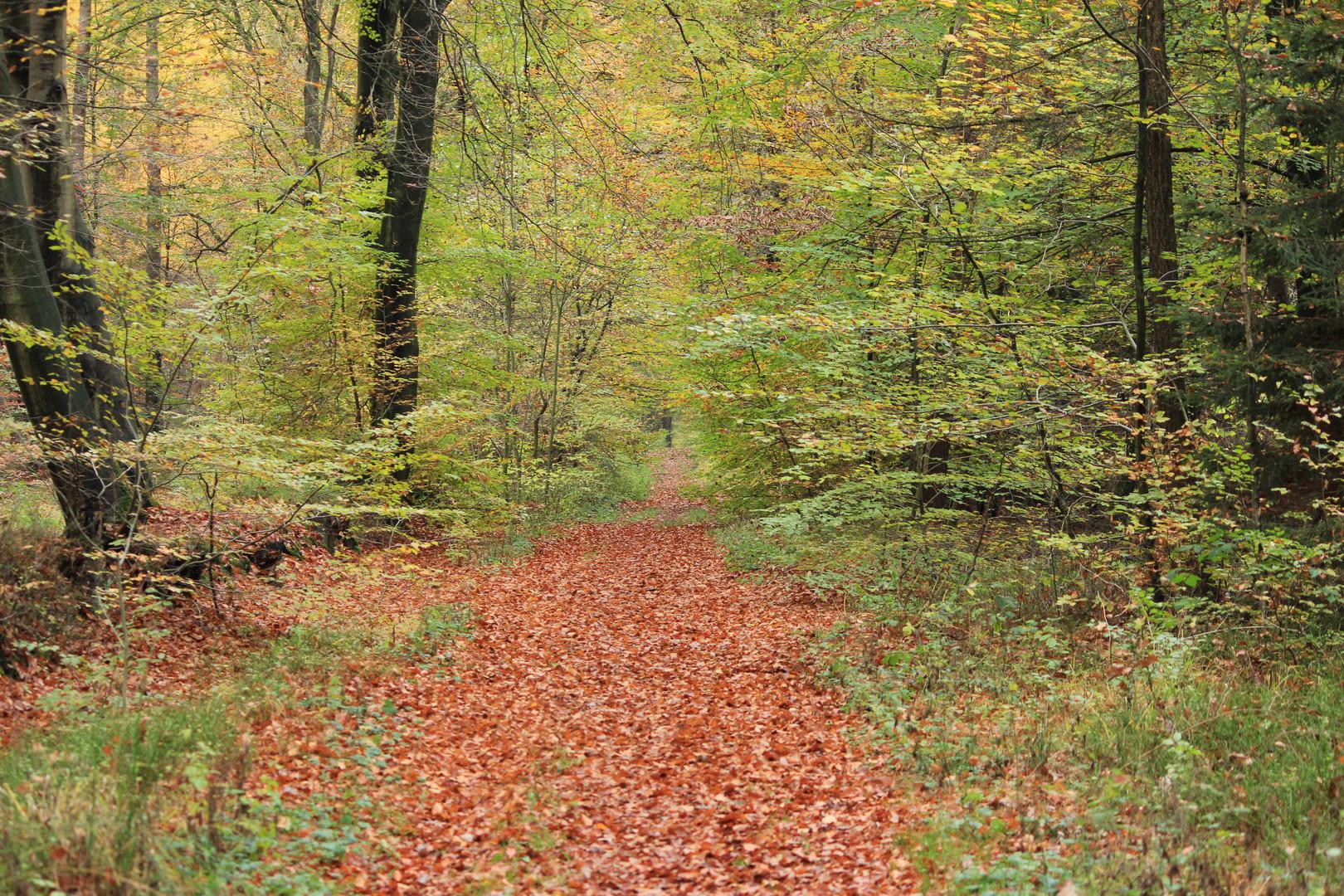 Die Farben den Herbstes brauchen sich denen des Sommers nicht zu verstecken