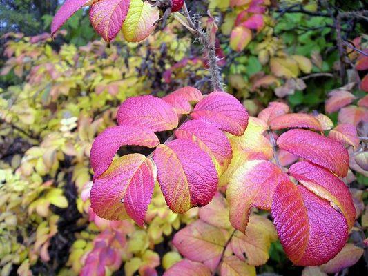 Die Farben der Herbstes
