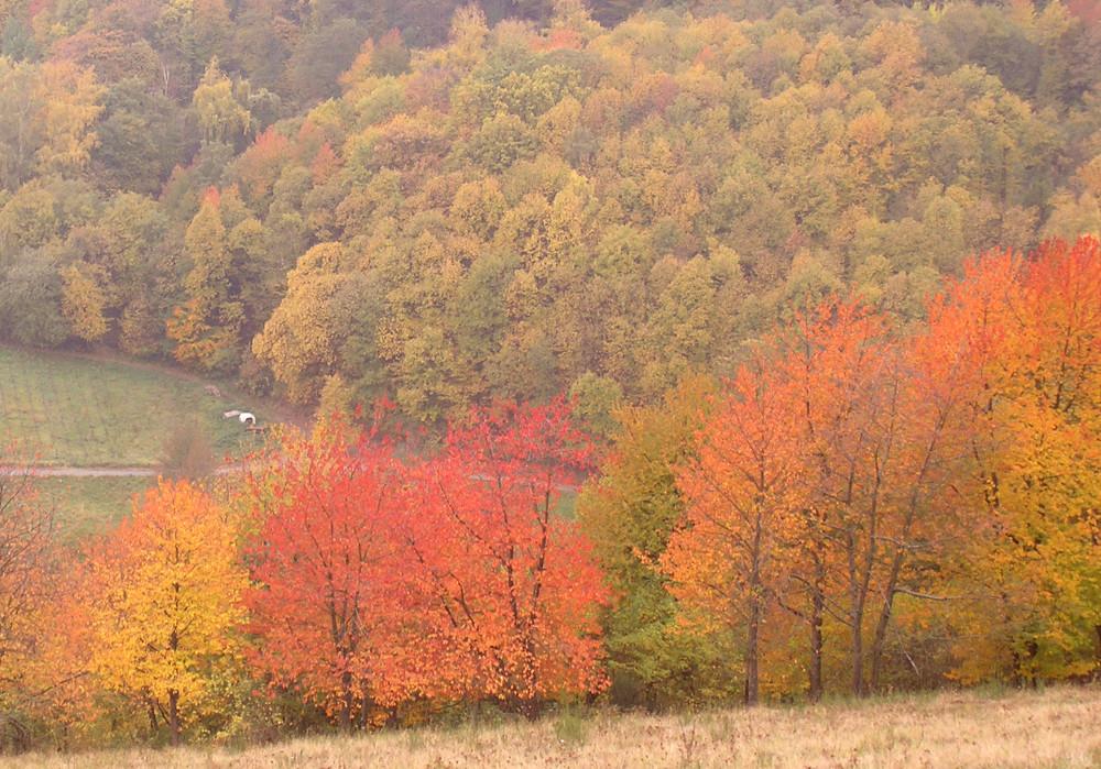 Die Farben der Pfalz Ende Oktober 1